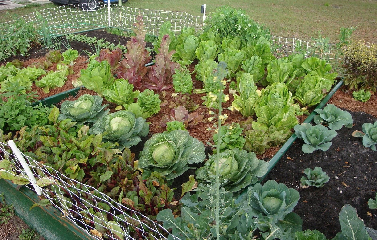 watering-vegetable-gardening-in-planters