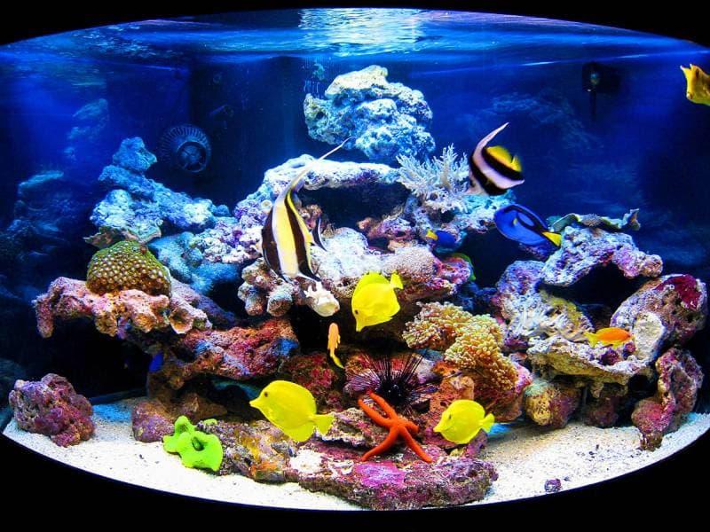 Стоит ли покупать аквариум ?